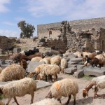 Exploring Damascus and other ancient cities of Syria