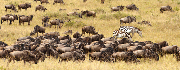 The magic of the Great Migration