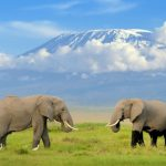 Misty Kilimanjaro: tracking big game in Africa