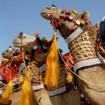 Festival spotlight: The Jaisalmer Desert Festival in Rajasthan, India