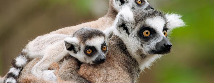 Land of the lemurs