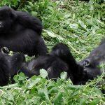 Tracking gorillas in Uganda with Team Kevan: Part 1