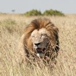 Tracking the Big 5 in the Serengeti