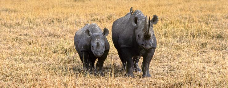 Flying Rhinos