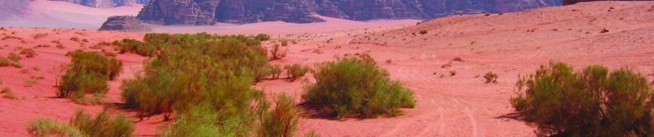 The trek into Petra