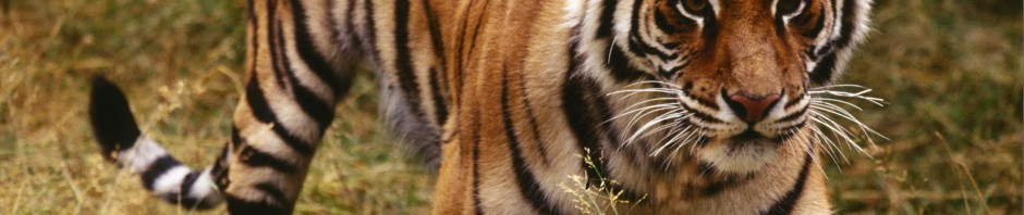 Top 10 tips for travellers to India's tiger reserves