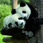 Who's a lucky panda then? Time to announce the name of our winner!