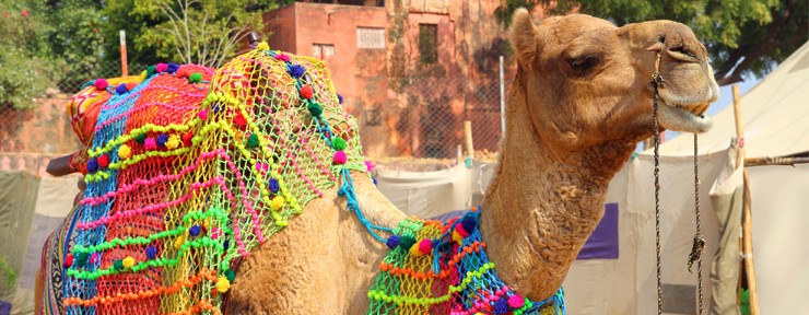 Camels, cows, horses, thousands of people!…Pushkar!