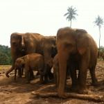 Sri Lanka's UNESCO World Heritage Sites – Part 2