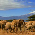 A journey up Kilimanjaro – Africa's highest peak