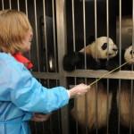 Giant Pandas – Part Two