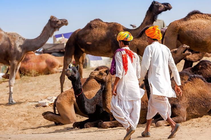 Traders at the Pushkar camel fair
