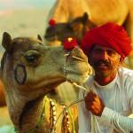 The Pushkar Camel Fair 2013