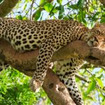 Wildlife spotting in Africa