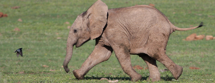 On The Go Tours adopts orphan African elephant