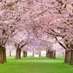 Celebrate the seasons in Japan