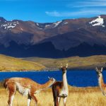 Top 8 things to do in Chile