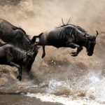 Top 8 things to do in Kenya