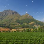 Table Mountain, wine & whale spotting