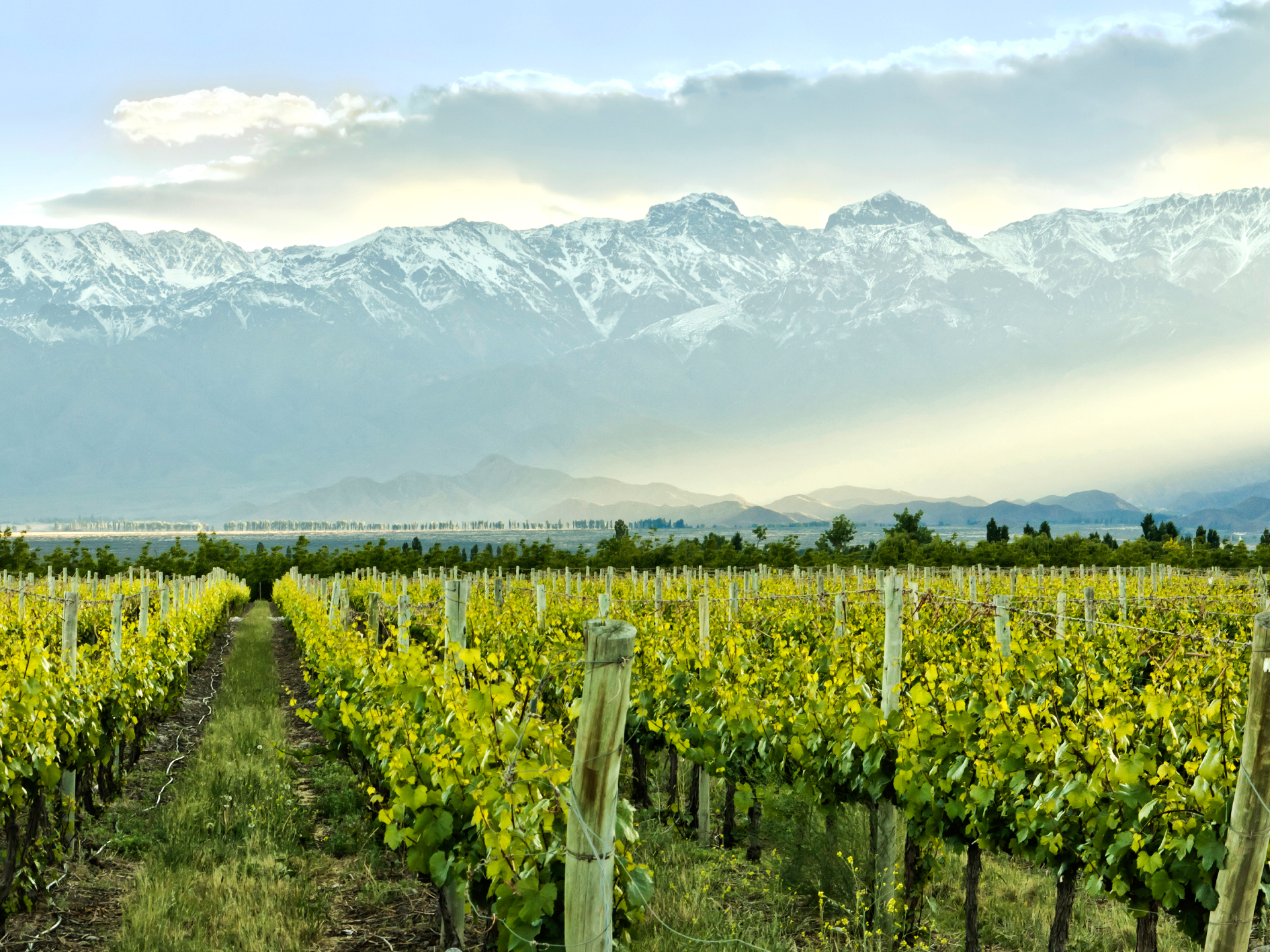Visit vineyards in Mendoza and sample the delicious wines on offer