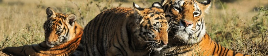 The Economics of Tiger Tourism