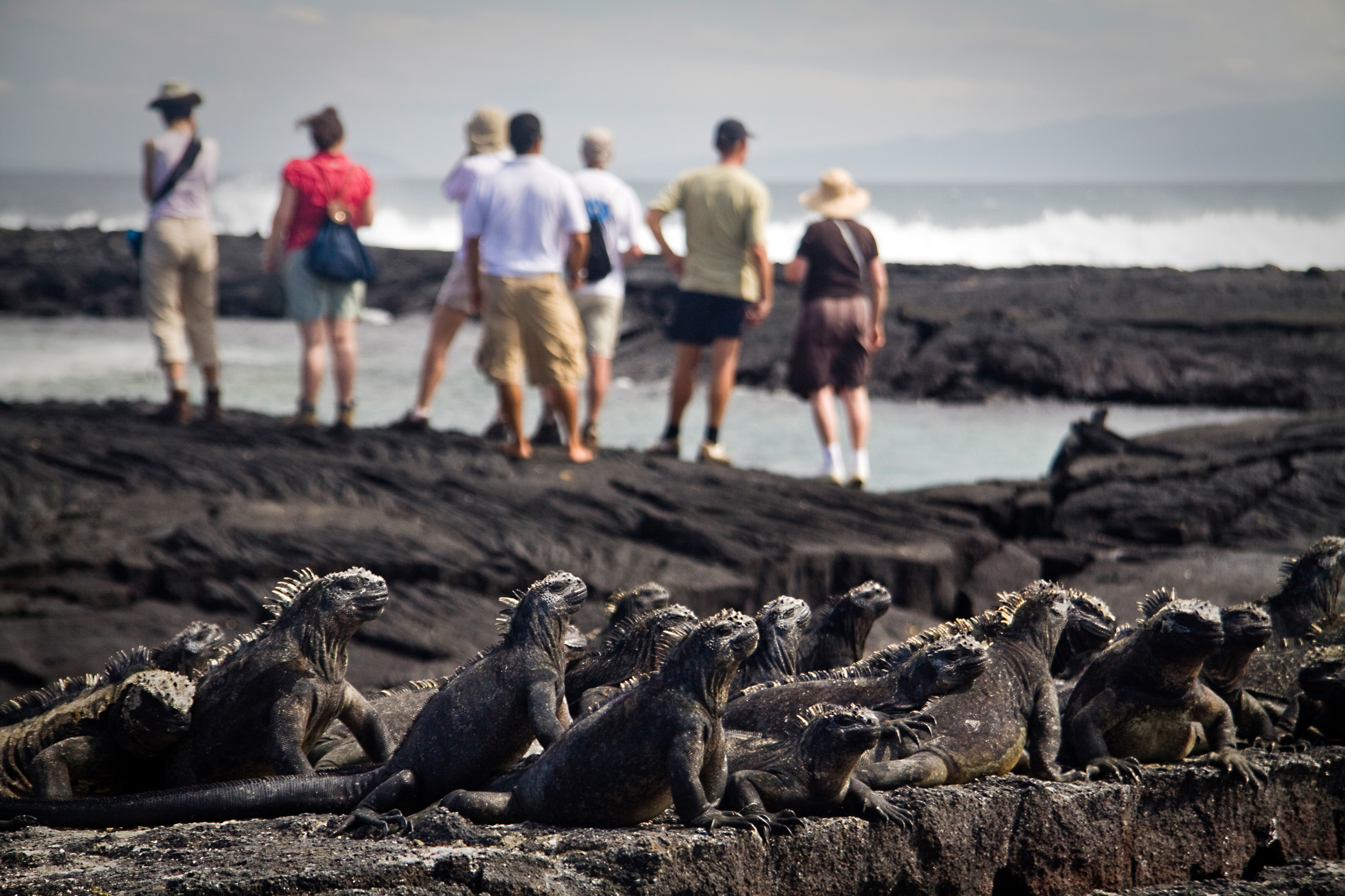 Spot incredible and unique wildlife on the Galapagos Islands
