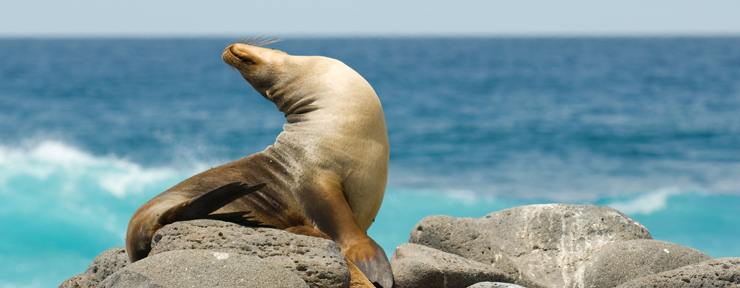 10 interesting facts about the Galapagos Islands
