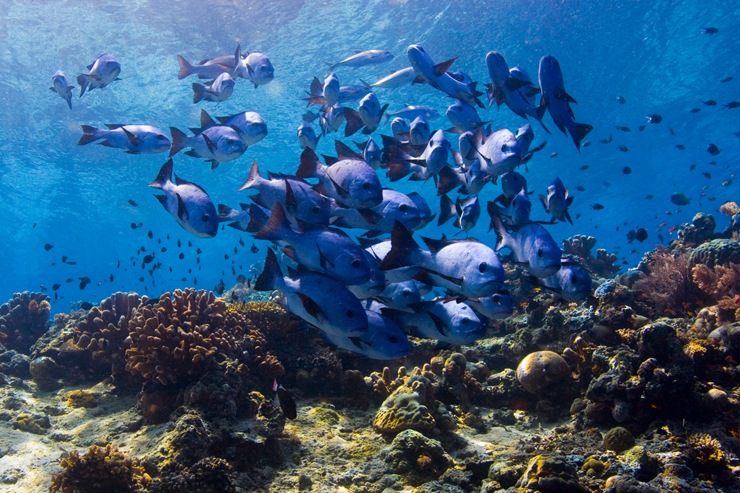 Fish in the waters of Borneo