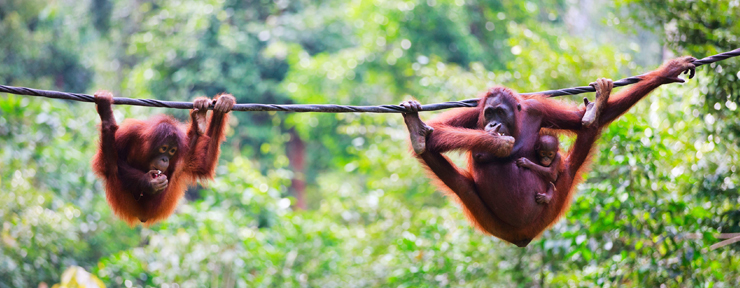 Why You Need To Visit Borneo