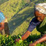 Wildlife, temples and tea plantations in Sri Lanka