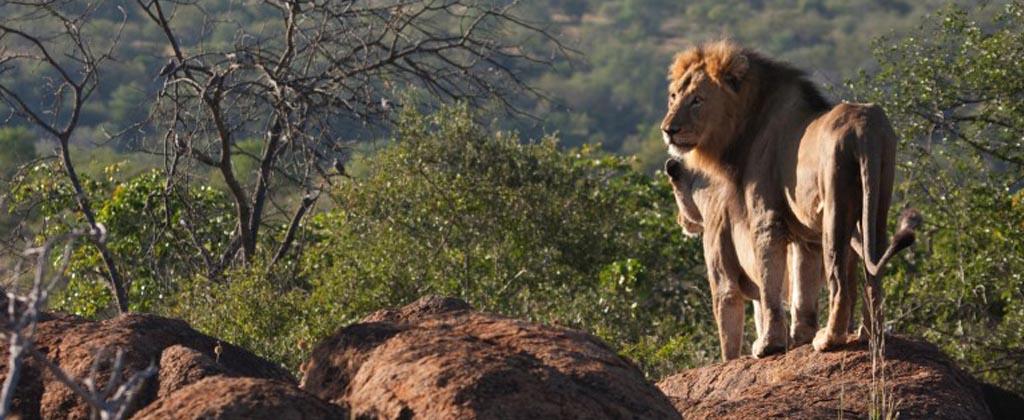 The wildlife of Singita concession