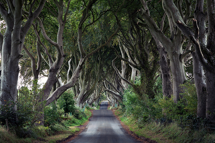 The Dark Hedge - Game of Thrones Set Jetting