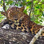 A Sri Lanka safari