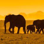 Instagrams of the month: Spotlight on Kenya