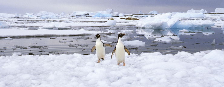 Instagrams of the month: Spotlight on Antarctica