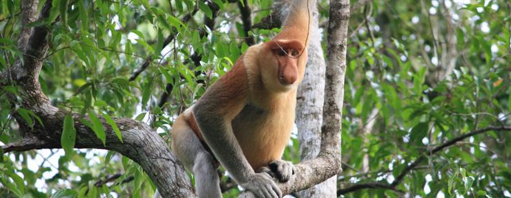The wildlife of Borneo