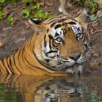 Ranthambore National Park: From Bust to Boom