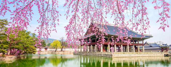 Where to See Cherry Blossoms in South Korea