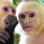 Costa Rica's Biodiversity in Photos
