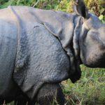 Safari in Nepal's Chitwan National Park