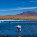 The flamingos, salt flats and mountains of Bolivia