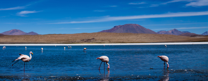 The flamingos, salt flats and mountains of Bolivia