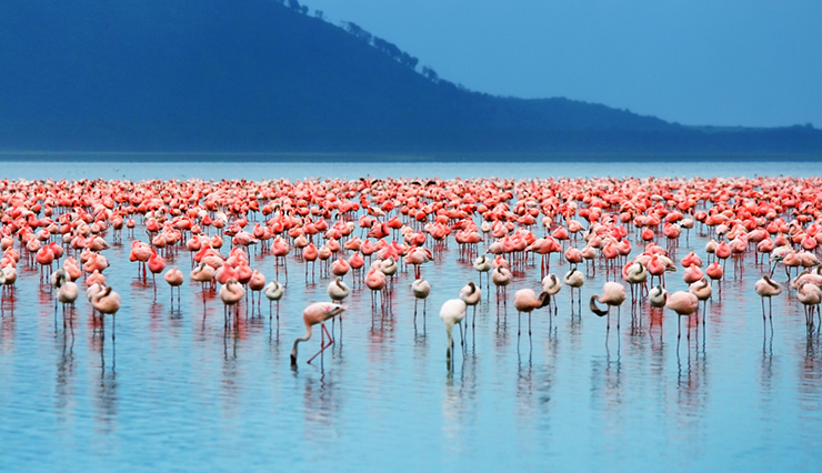 World's greatest lakes - Lake Nakuru in Kenya