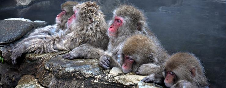 Snow Monkey Hot Tub