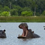 10 Interesting Facts About The Okavango Delta