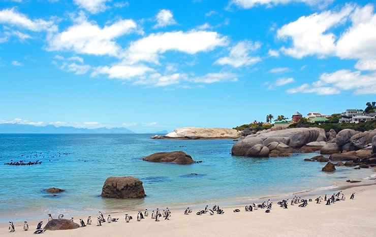 Boulders Beach, South Africa - the world's most unusual beaches