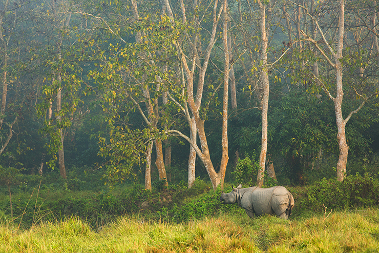 Chitwan National Park - Best National Parks in Asia