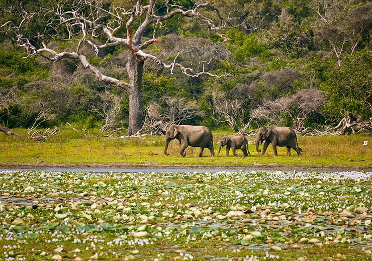 Gal Oya National Park - best national parks in Sri Lanka