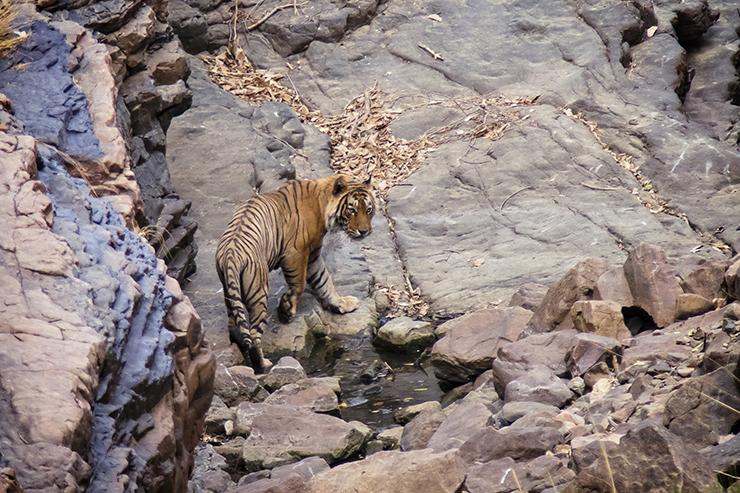 Ranthambore National Park - Best National Parks in Asia