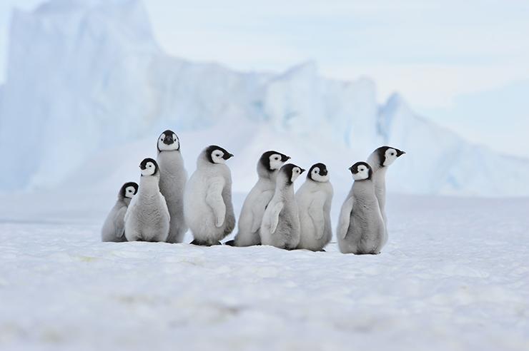 Antarctica - best winter experiences
